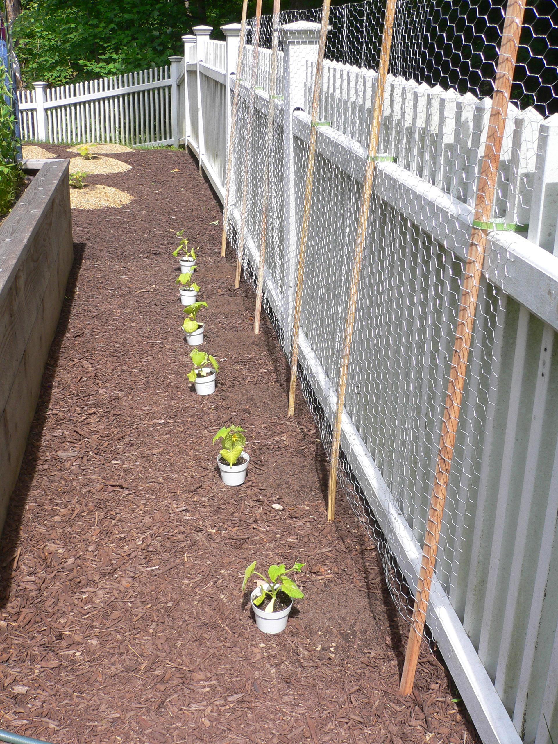 Watering Cans Garden Engineer